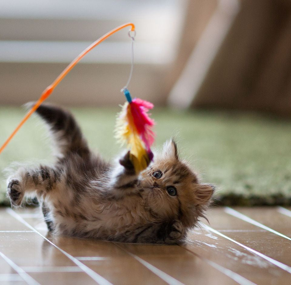 Best Cat Toys Of 2019