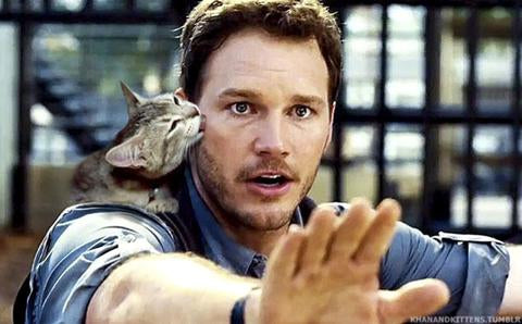 When Someone Replaces Dinosaurs with Cats in Jurassic Park!