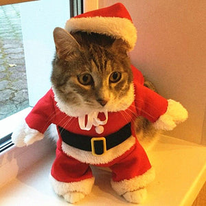 Santa Claus Christmas Outfit - Purrfect Apparel