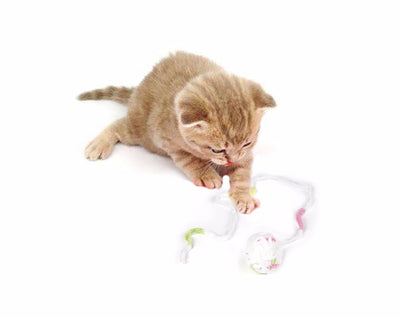 24 Piece Cat Toy Bundle - Purrfect Apparel