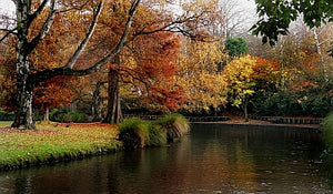 New Zealand's Favourite Public Gardens to Visit