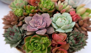 Tips on Growing and Propagating Succulents