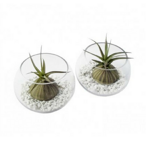 Air Plant Bowl Gift Set - Tree Gifts NZ