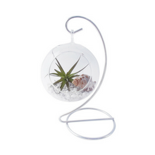 Air Plant Terrarium - Tree Gifts NZ