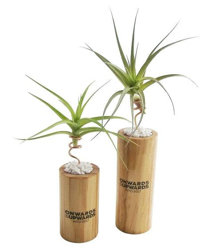 Corporate Branded Air Plant Holders and Wooden Stands