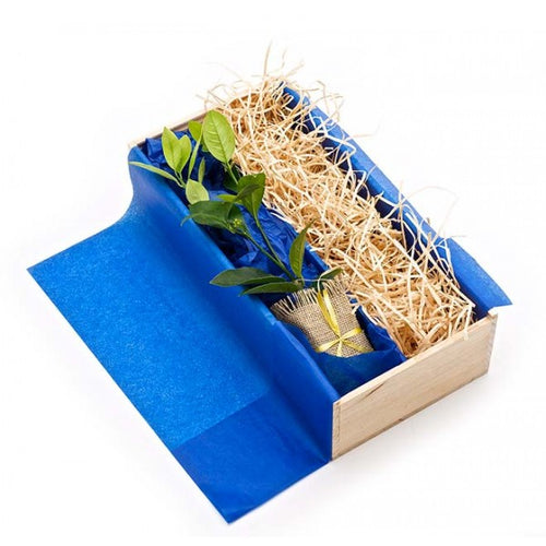Green Business Gifts - Tree Gift and your own products