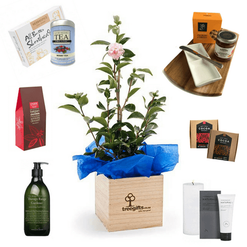 Create a Planter Gift - Tree Gifts NZ