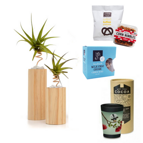 Create an Air Plant Gift - Tree Gifts NZ