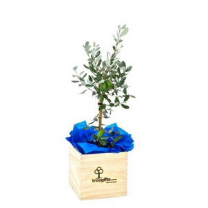Feijoa Tree Gift - Large - Tree Gifts NZ