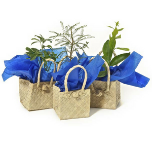 Tree Gifts in Kete Bags - Business Gifts NZ