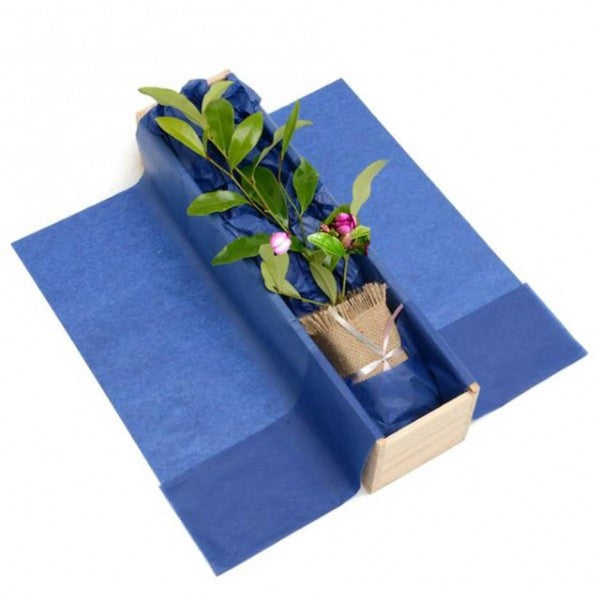 Magnolia Tree Gift - Tree Gifts NZ