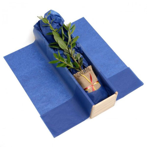 Pohutukawa Tree Gift in Wooden Gift Box delivered in NZ