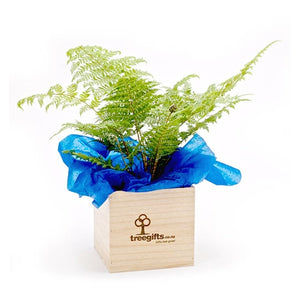 Native NZ Silver Fern - Tree Gifts NZ
