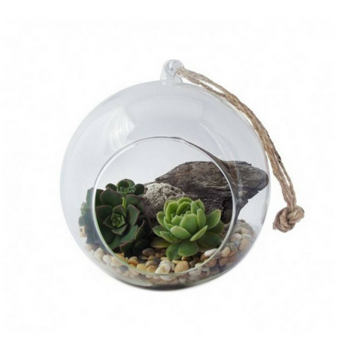 Hanging Succulent Garden - Tree Gifts NZ