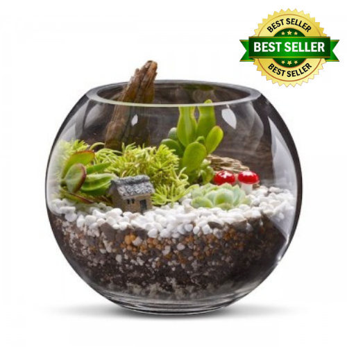 Woodlands Terrarium Kit