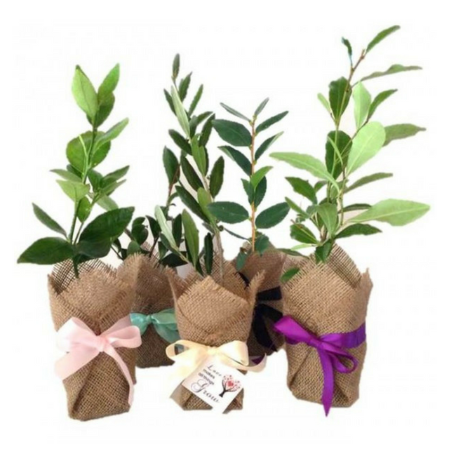 Green Tree Favour Gifts for Weddings & Conferences – Tree Gifts NZ