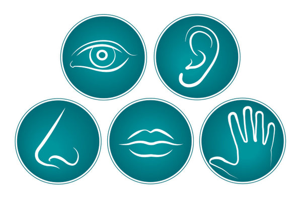 Designing for the Five Senses