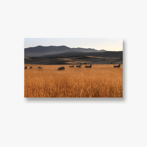 ODT Canvas Collection - I See Ewe