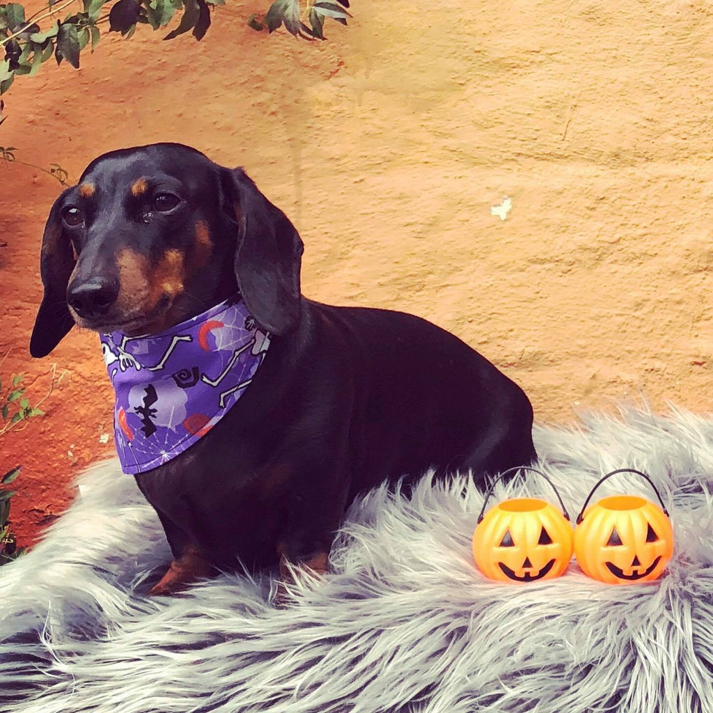 Dog Bandana - Halloween Skeleton Print by That Dog Shop - We have Afterpay!