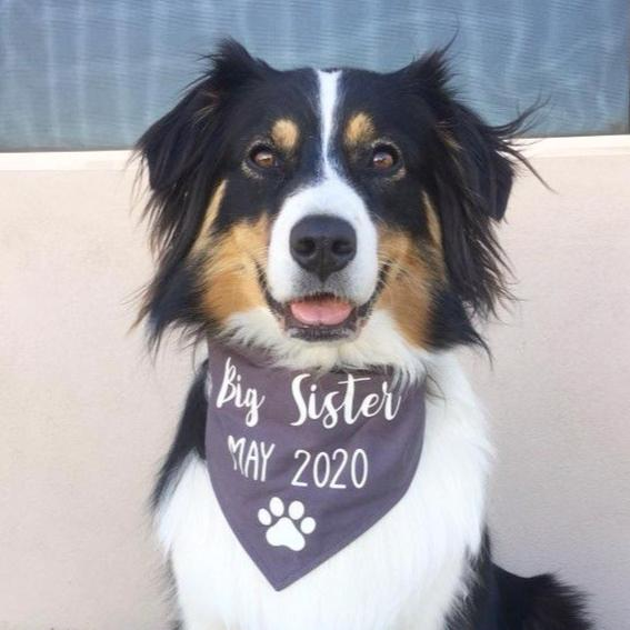 Pregnancy Announcement Dog Bandana Big Brother/Big Sister - Grey