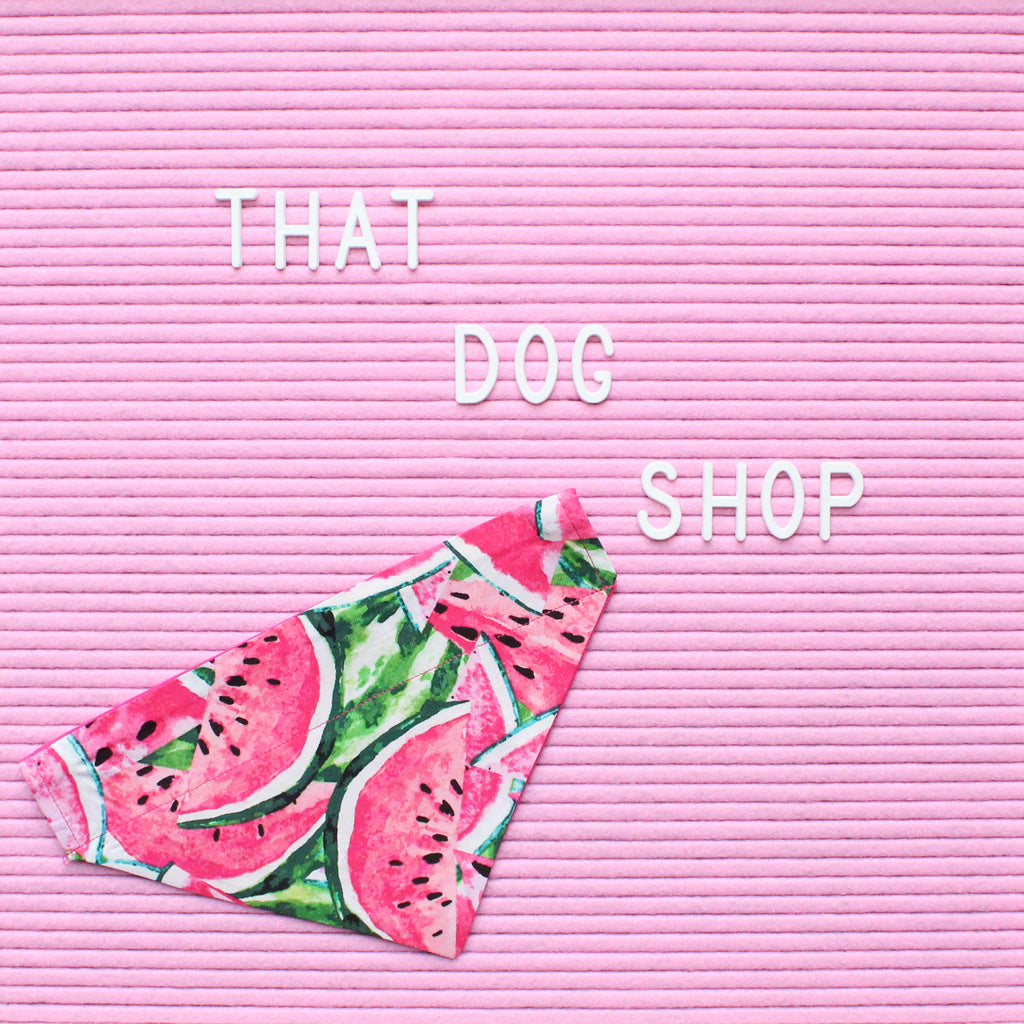 Collar Dog Bandana - Watermelon by That Dog Shop - We have Afterpay!