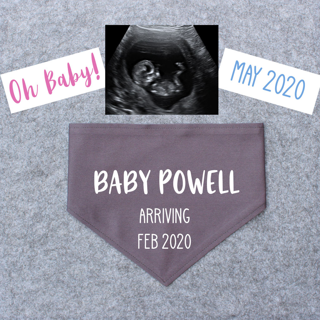 Pregnancy Announcement Dog Bandana Last Name/Due Date - Grey