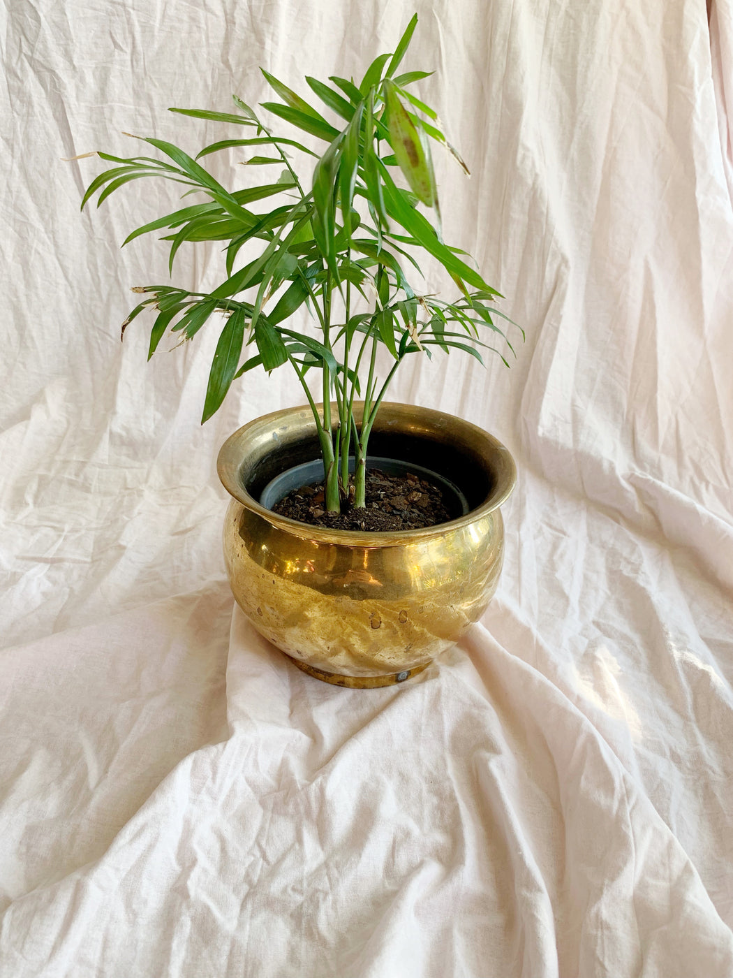 Medium Brass Pot | Storytellers Workshop