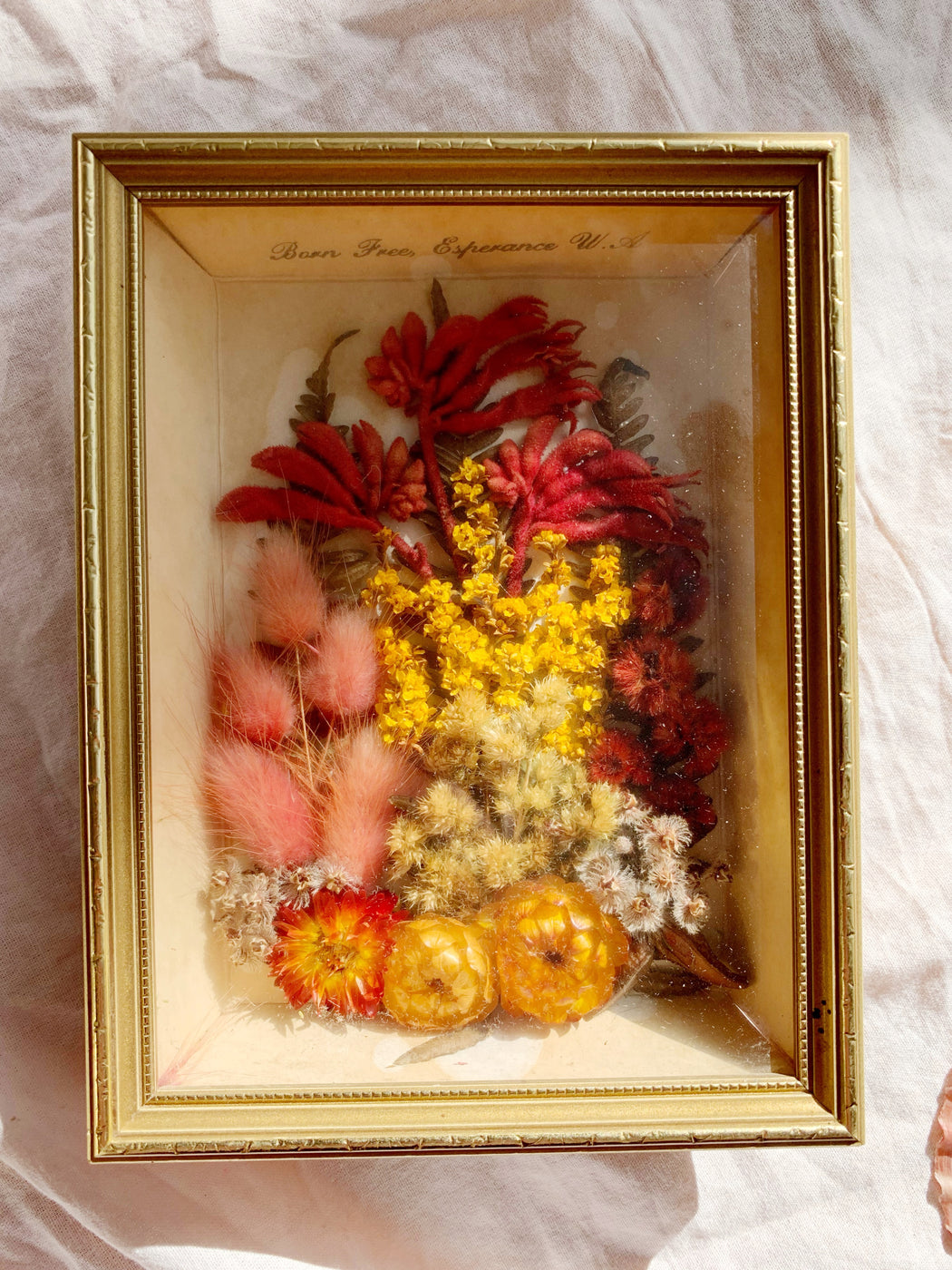 Australian Native Framed Dried Flowers - Storytellers Workshop