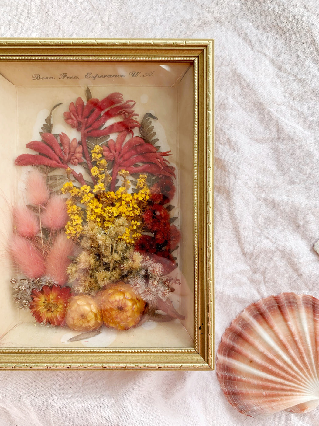 Australian Native Framed Dried Flowers