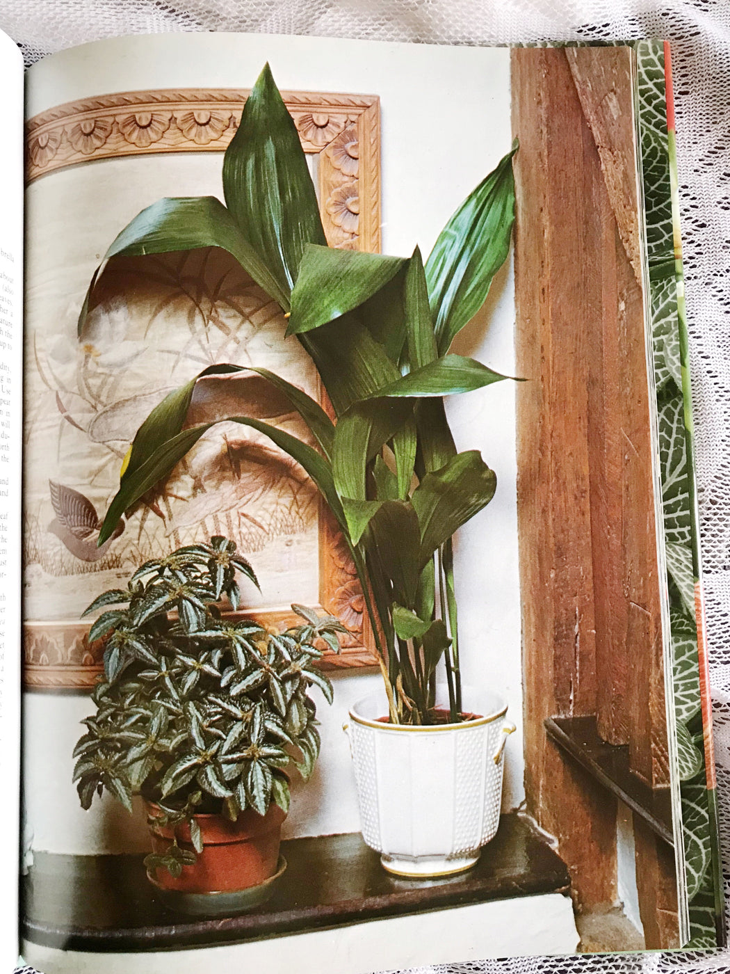 The Wonderful World of Indoor Plants - By Ann Bonar