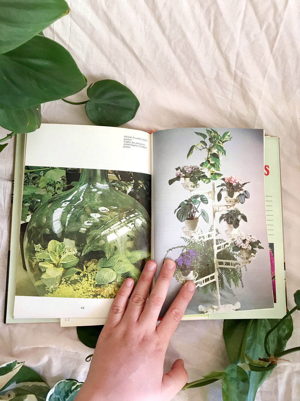Indoor Plants Book | Storytellers Workshop