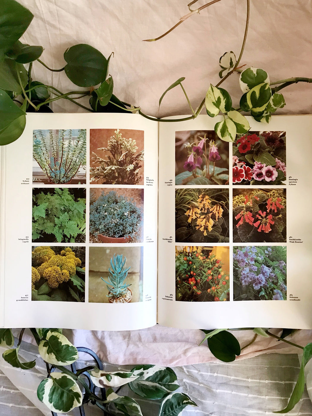 The Dictionary of Indoor Plants | Storytellers Workshop