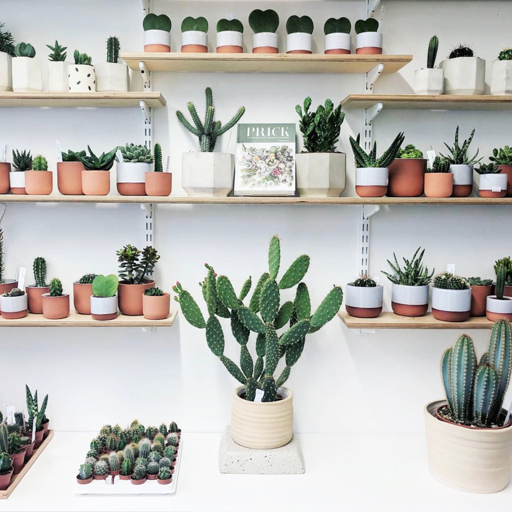 Prick London plant shop - Brands we love owned by Women of Colour