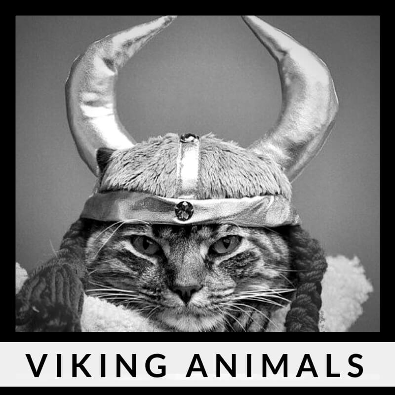 Viking animals | What kind of pets did the Vikings have?