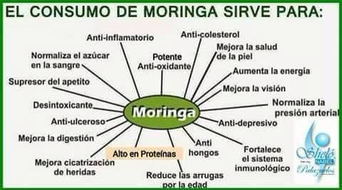 moringa concentrate