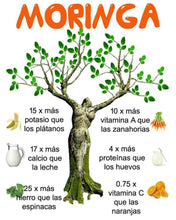 Upload image to gallery viewer, moringa benefits