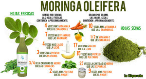 moringa concentrate to take