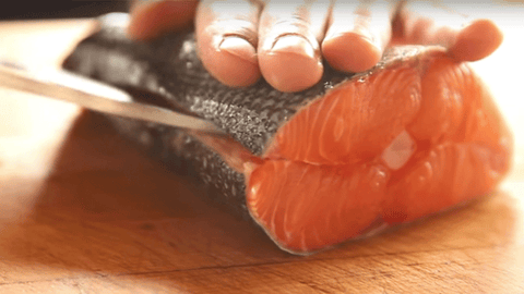 filleting salmon