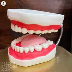 mouth model #4