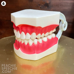 mouth model #6
