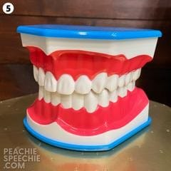 mouth model #5