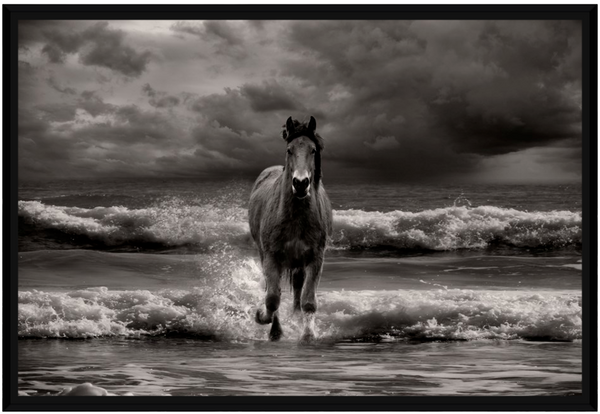 Freedom Horse framed canvas print