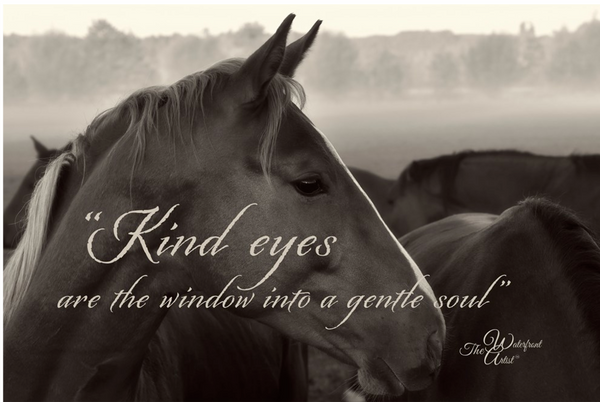 Kind eyes are windows to the soul