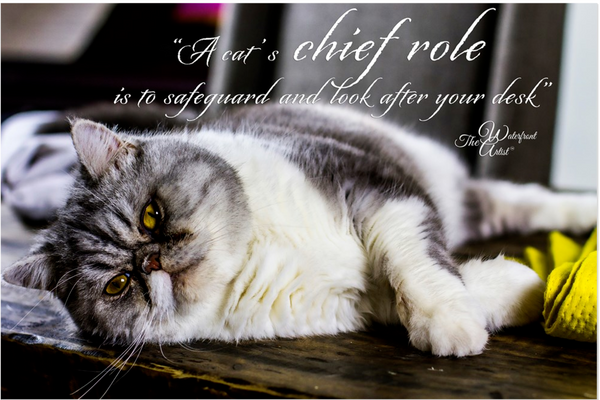 A Cat's Role