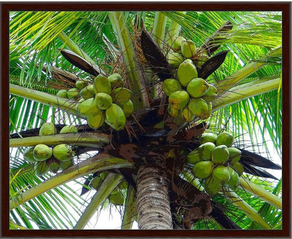 Framed coconut clusters canvas wrap