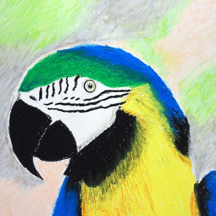 Birds in Oil Pastels - Monday 29th July 6-8pm