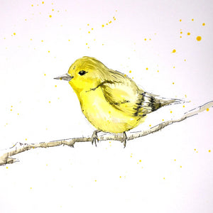 Pen and Ink Wildlife - Saturday 5th October, 10am-12pm