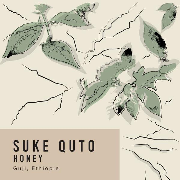Suke Quto Honey
