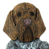 German Wirehaired Griffon