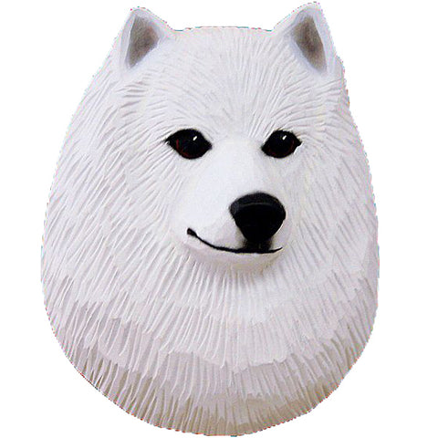American Eskimo Dog Small Head Study